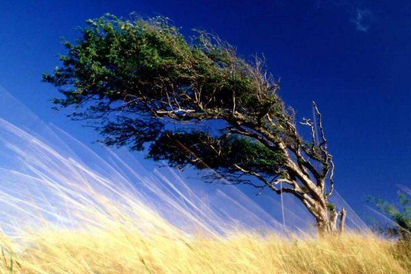 viento_fuerte