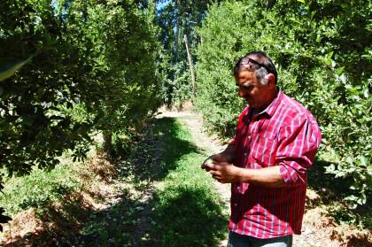 Chacareros del Valle bloquearán hoy la ruta 22 con toneladas de pera por no poder venderla